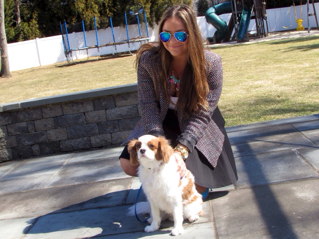 tweed blazer king charles cavalier mirrored aviators sunglasses blue suede pumps spring fashion blog fashion blogger missyonmadison blogger pet dog puppy puppy love chic style sunglass warehouse target style statement necklace